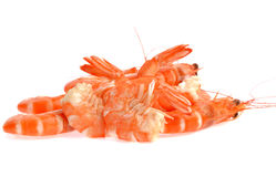 Fresh shrimp isolated on a white background Royalty Free Stock Images