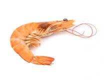Fresh  shrimp  isolated  on a white background Stock Images