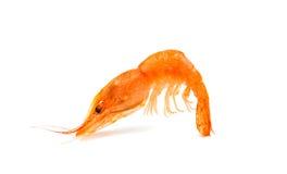 Fresh shrimp isolated Royalty Free Stock Image