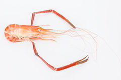 Fresh shrimp isolated on white Stock Photography