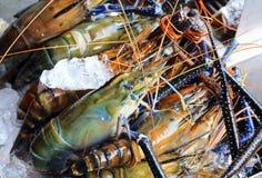 Fresh shrimp Royalty Free Stock Images