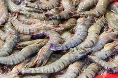Fresh shrimp at the market Royalty Free Stock Photography