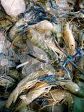 Fresh shrimp in Market Royalty Free Stock Images