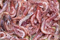 Fresh shrimp at the market Royalty Free Stock Images