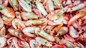 Fresh shrimp at the market for sell stock image