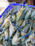 Fresh shrimp at Market Stock Photo