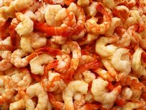 Fresh Shrimp in a Pile Stock Image