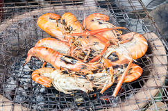 Fresh shrimp place on the grill Stock Photography