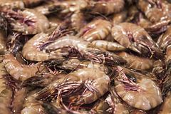 Fresh shrimp or prawn s on ice. Seafood market. Fresh just caught seafood delicacies. Street food royalty free stock photo
