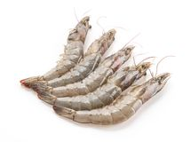 Fresh shrimp/prawn. On white background Stock Images