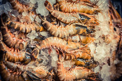 Fresh shrimp prawns with ice at the market for sell. Shrimps Top view. Fresh shrimp with ice at the market for sell. Shrimps Top view Royalty Free Stock Photos