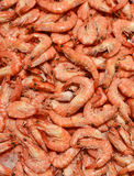 Fresh shrimp or prawns on ice Stock Photos