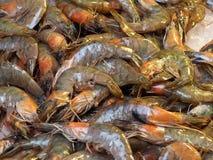 Fresh Shrimp Or Prawns For Sale Royalty Free Stock Photos