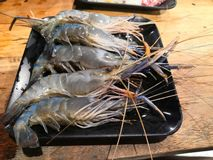 Fresh Shrimps on Black Plate. royalty free stock photo