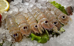 Fresh shrimp  in the shop Stock Images