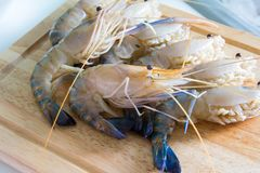 Fresh shrimp shrimp river Stock Photography