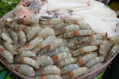 Fresh shrimp and squid on Ice in the market Thailand. Fresh seafood. Fresh shrimp on Ice in the market Thailand Thai food royalty free stock images