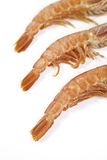 Fresh shrimp tails Stock Images