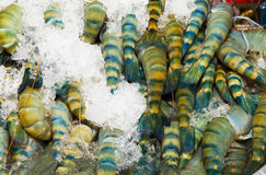 Fresh shrimp , Thailand Stock Photo