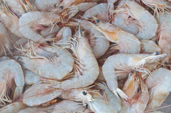Fresh shrimp in the water Royalty Free Stock Photos