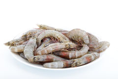 Fresh shrimp Stock Photography