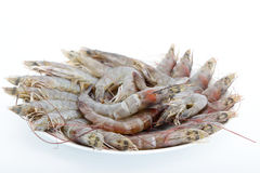 Fresh shrimp Royalty Free Stock Photos