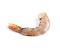 Fresh shrimp. Stock Image
