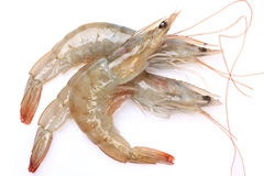Fresh shrimp Stock Photos