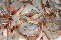 Fresh Shrimps Royalty Free Stock Photos