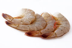 Fresh shrimps Royalty Free Stock Photo