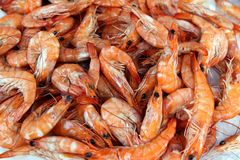 Fresh Shrimps Royalty Free Stock Images