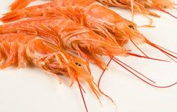 Fresh shrimps Royalty Free Stock Photography
