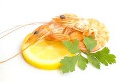 Fresh shrimps Royalty Free Stock Image