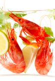 Fresh shrimps Stock Image