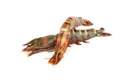 Fresh shrimps Stock Images
