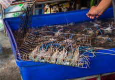 Fresh shrimps. Choose fresh shrimps to grilled in seafood market Royalty Free Stock Photography