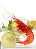 Fresh shrimps in cold water Royalty Free Stock Photos