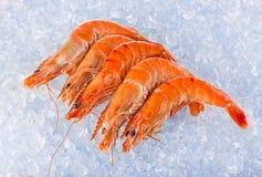 Fresh shrimps on crushed ice. Stock Photo