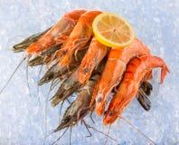 Fresh shrimps on crushed ice. Stock Photography