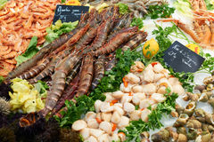 Fresh shrimps on fish market in France Stock Image