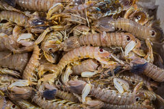 Fresh shrimps on a fish market Stock Photography