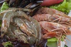 Fresh shrimps and fish. On metallic platter Royalty Free Stock Images