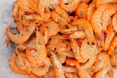 Fresh shrimps on ice Royalty Free Stock Images