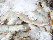 Fresh shrimps in ice Stock Image