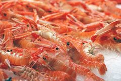 Fresh shrimps on ice Stock Photography