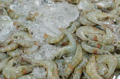 Fresh shrimps Stock Photography