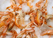 Fresh shrimps on ice Royalty Free Stock Photography