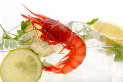 Fresh shrimps in icy water Royalty Free Stock Images