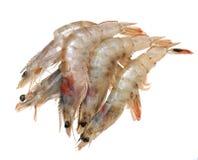 Fresh shrimps isolated on white Royalty Free Stock Photography