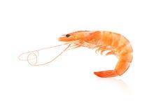 Fresh shrimps isolated Stock Photos
